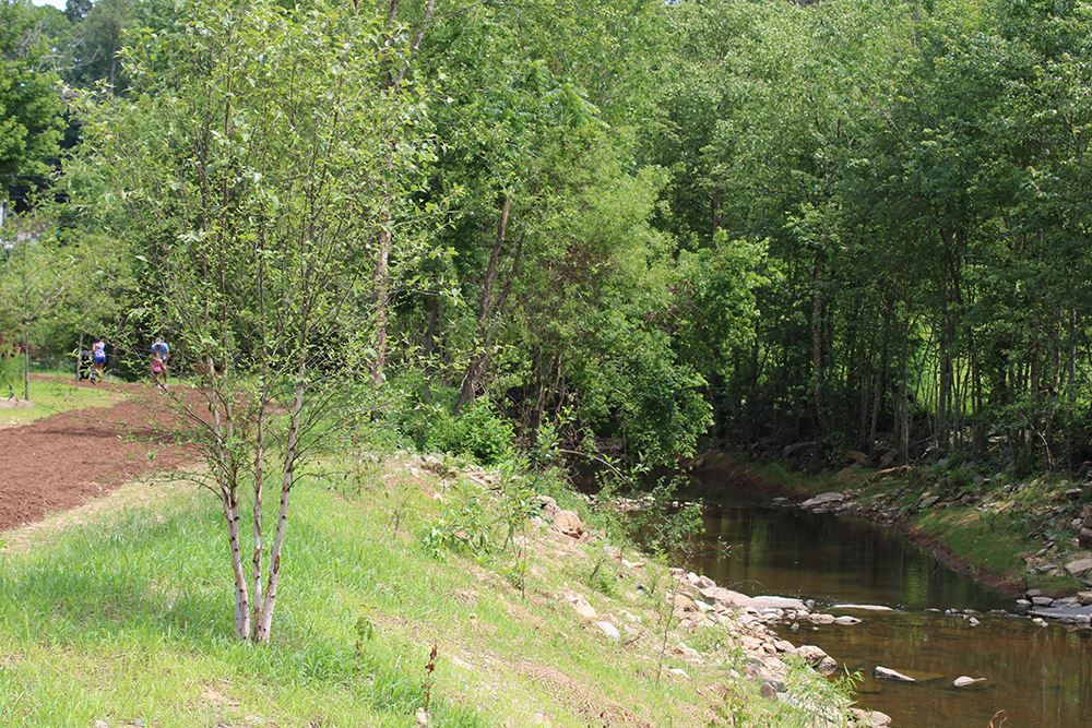 Trail by stream bed at Bass Lake Park